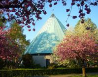 Kirchengebäude mit blühenden Kirschbäumen